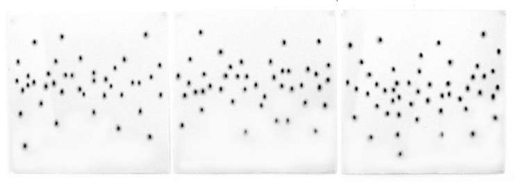 coding 456, c4-6 as a triptych, each 45 x 45cm, charcoal on paper