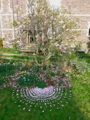 Magnolia Petal Drawing, c. 5ft diameter, found fallen magnolia petals