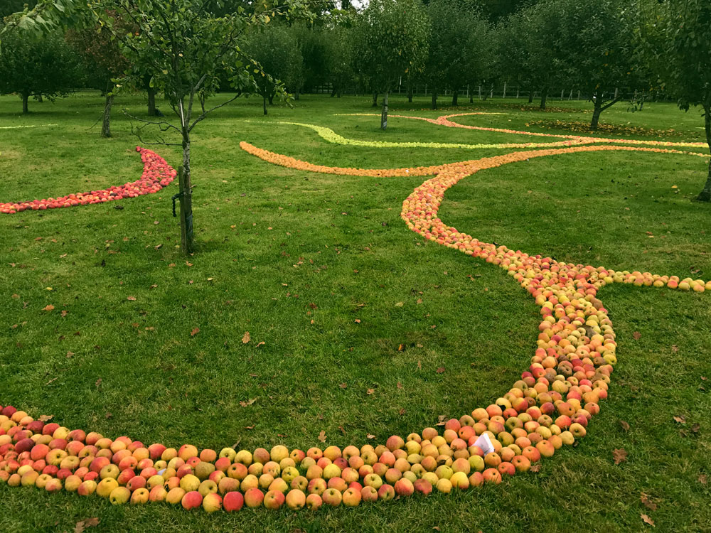 Apple Drawing Out of Nature 2017 6