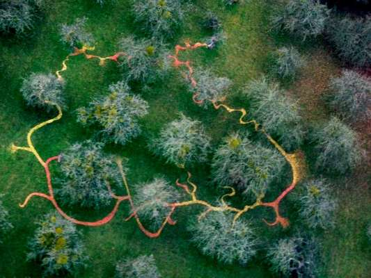 Aerial Photograph at 500ft , 100ft x 80ft, Windfallen Apples