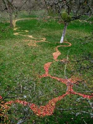 West Section, 100ft x 80ft, Windfallen Apples