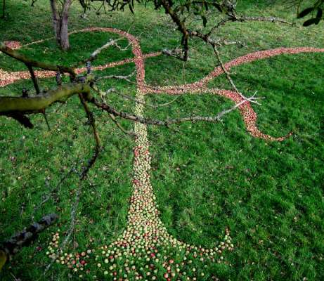 South Section of Drawing, 100ft x 80ft, Windfallen Apples