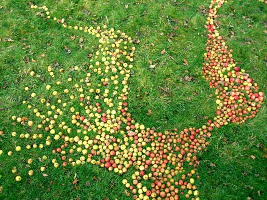 West Section Detail, 100ft x 80ft, Windfallen Apples