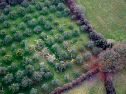 Aerial Photograph of orchard, 100ft x 80ft, Windfallen Apples