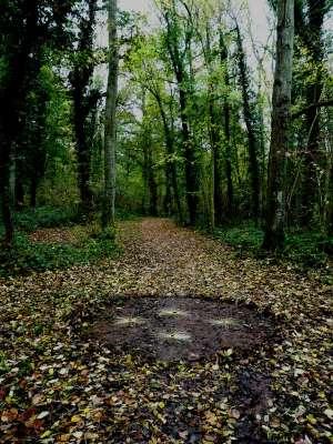 view from public footpath, found fallen ash leaf stalks