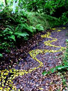 the drawing on approach from the bottom of the track, 20ft x 5 ft, fallen holly leaves