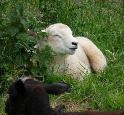Sheeps Wool Community Drawing