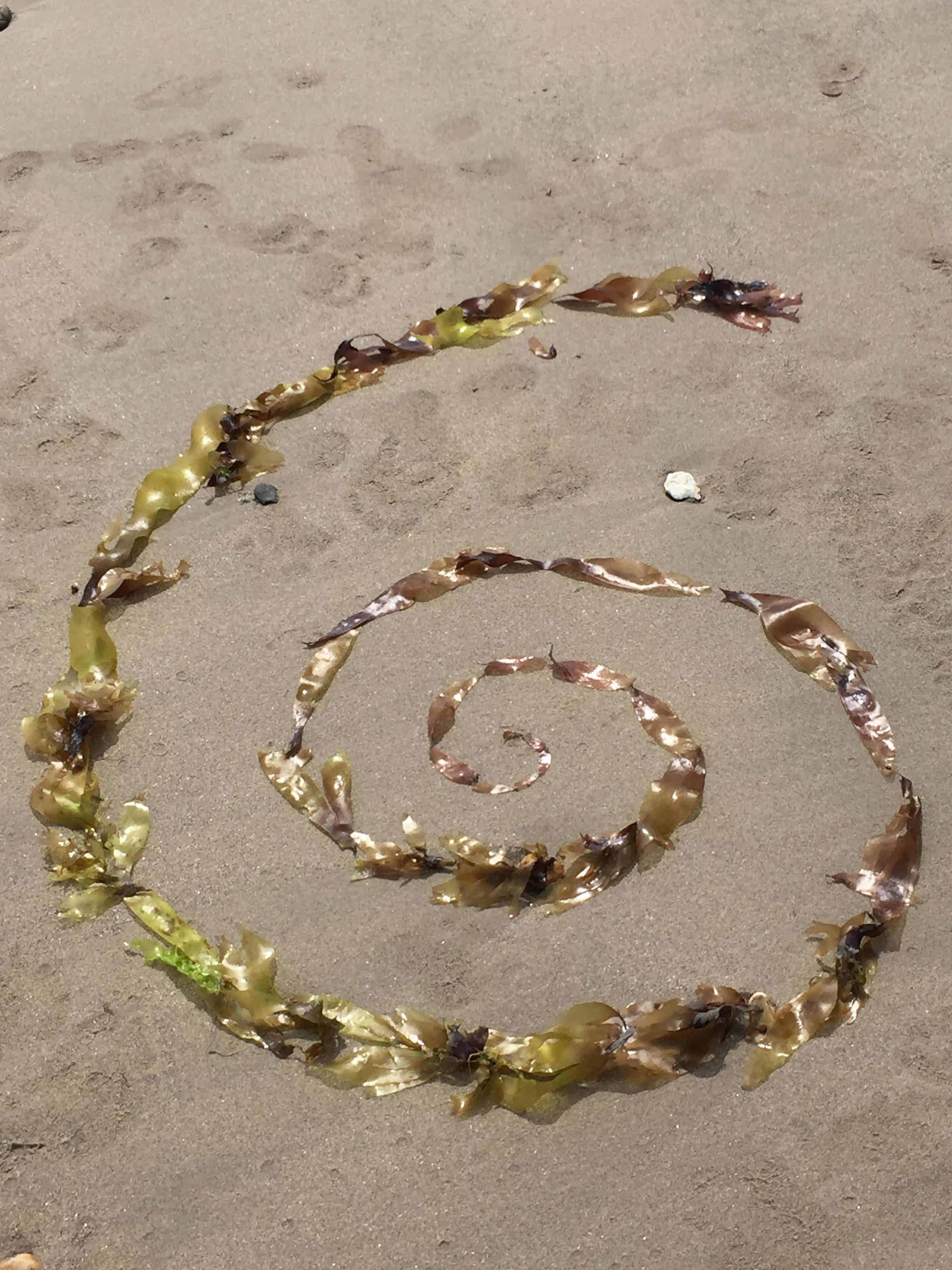 seaweed spiral