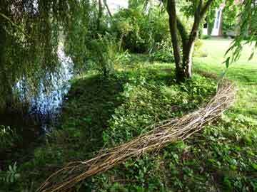 Willow Drawing, 12 x 50ft, found willow cuttings