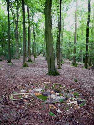 drawing in the woods, 15ft diameter, found woodland materials
