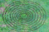 catkin circle