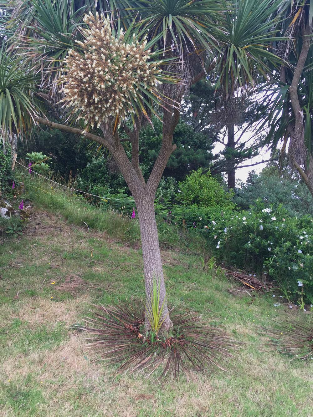 under palm tree